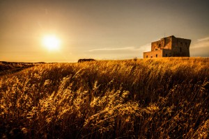 Golden Field in Italy