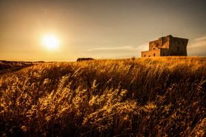 Golden Field in Italy