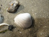 oceans-shell-on-beach