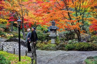 Growing Old Together Amid Autumn in Seattle, Washington